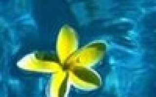 Стеллаж для растений на подоконнике