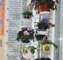 Размещение цветов на подоконнике