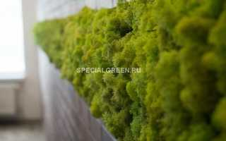 Как сделать мох на стене?
