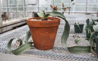 Экзотические растения на подоконнике