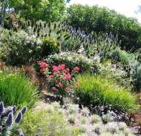 6 красивых растений для укрепления склонов