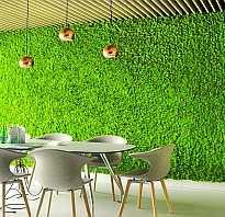 Как вырастить мох на стене?