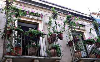 Украшаем балкон с помощью цветов в горшках за окном