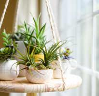 Как подвесить цветы: 4 простых мастер-класса