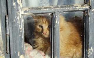 Чем и как утеплить окна на зиму